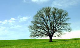 Lonely tree. Green field and a lonely tree stock image