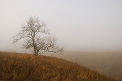 Lonely tree. In autumn fog Stock Photography