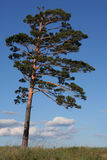 Lonely tree. Against the sky with clouds Stock Images