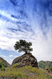 Lonely tree. A lonely tree with blue sky Stock Photo