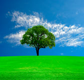 Lonely tree. Green field and lone tree under blue cloudy sky Royalty Free Stock Photo
