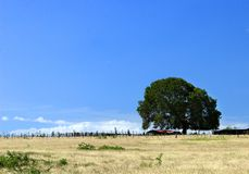 Lonely tree. In a grass landscape Stock Image