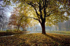 Lonely tree. In Skopje city park Royalty Free Stock Image