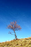 Lonely Tree. A lonely tree in the blue sky royalty free stock image