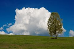 Lonely tree. In a field royalty free stock images