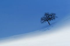 Lonely tree. A lonely apple tree in snowy landscape, half of filed is in shade the other half still lit by sun Royalty Free Stock Image