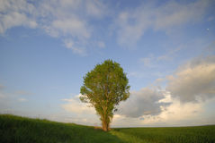 Lonely tree Stock Image
