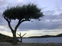 Lonely tree. Landscape, about the house  S. Dali Stock Images