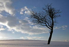 Lonely tree. In winter with cloudy sky royalty free stock image