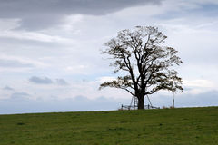 Lonely tree. Silhouette of a lonely tree Royalty Free Stock Image