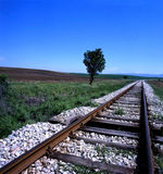 Lonely tree. Next to a railway Stock Photography