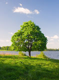 Lonely tree. Near the river Stock Photo