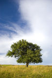 Lonely tree Stock Photos