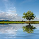 Lonely tree. On meadow with interesting clouds and water reflection Royalty Free Stock Photos