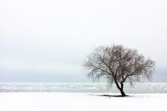 Lonely Tree. Near the sea; winter Royalty Free Stock Photo
