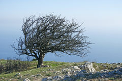 Lonely tree. On high mountain. Crimean mountain. Ukraine Stock Images