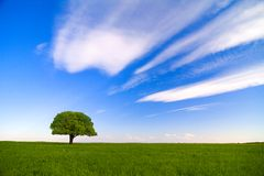 Single tree with blue sky Stock Images
