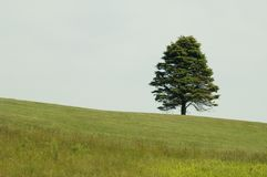 Lonely tree. In the field stock photos