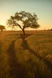 Lonely tree (2). Farm field Royalty Free Stock Photos