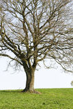 Lonely tree Royalty Free Stock Image