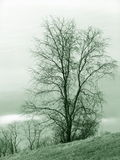 Lonely Tree. Winter tree, green toned Royalty Free Stock Images