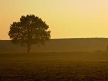 Lonely tree. During misty sunrise Royalty Free Stock Image