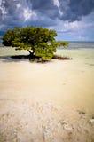 Lonely tree Stock Image