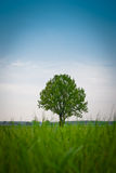Lonely tree. On blue sky background Royalty Free Stock Photos