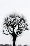 Lonely tree. Silhouette of a spooky lonely tree royalty free stock photos