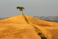 Lonely tree. A lonely tree in tuscan countryside Royalty Free Stock Photos