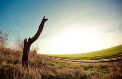 Lonely tree. On the field Stock Images