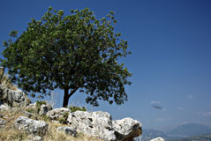 Lonely Tree. On the rocks against the clear blue sky on a sunny summer day Stock Images