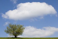 Lonely tree. On a green field Stock Image