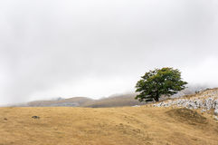 Lonely tree. With fog in Aizkorri natural park Stock Image