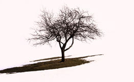 A lonely tree Royalty Free Stock Photography