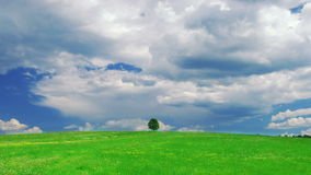 Lonely tree. On a meadow against sky with clouds stock footage