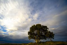 Lonely tree. A tree in the winter in israel israel stock photos