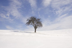 Lonely tree. Lonley tree in winter Stock Photography