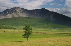 Lonely tree. Lonely tree at a grassland Royalty Free Stock Photography