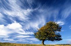 Free Lonely Tree Stock Image - 5031091