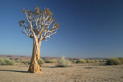 Lonely tree stock photography