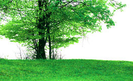 Lonely tree. A lonely tree on green field in summer. Cloudy sky royalty free stock photo