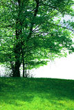 Lonely tree. A lonely tree on green field in summer. Cloudy sky Royalty Free Stock Images