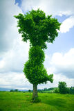 Lonely tree. A lonely tree on green field in summer. Cloudy sky royalty free stock photography
