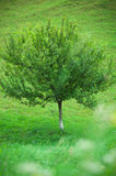 Lonely tree. On a grass field stock photo