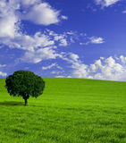 Lonely tree. And green grass. Nice XXL nature background Stock Photo