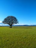 Lonely Tree. A lonesome tree in a farmer's field Stock Photo