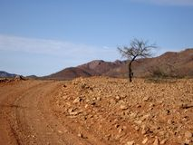 Lonely tree. A tree in a field of rocks with hills in the background Royalty Free Stock Photos