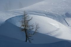Lonely tree. Pine tree immersed in snow Stock Photos