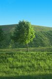 Lonely tree. Green tree on the meadow royalty free stock photos